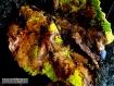 I colori delle foglie