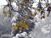 autunno_neveUBE029.jpg