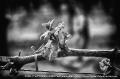 16 aprile 2016 MONFERRATO  - fotografia di Vittorio Ubertone