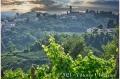 17 giugno 2021 Vinchio - Cantina sociale Vinchio e Vaglio - fotografia di Vittorio Ubertone