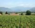 ronco-calino-franciacorta-winery-576x401