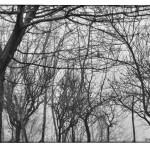 2 febbraio 2017 Nebbie invernali nei vigneti - fotografia di Vittorio Ubertone
