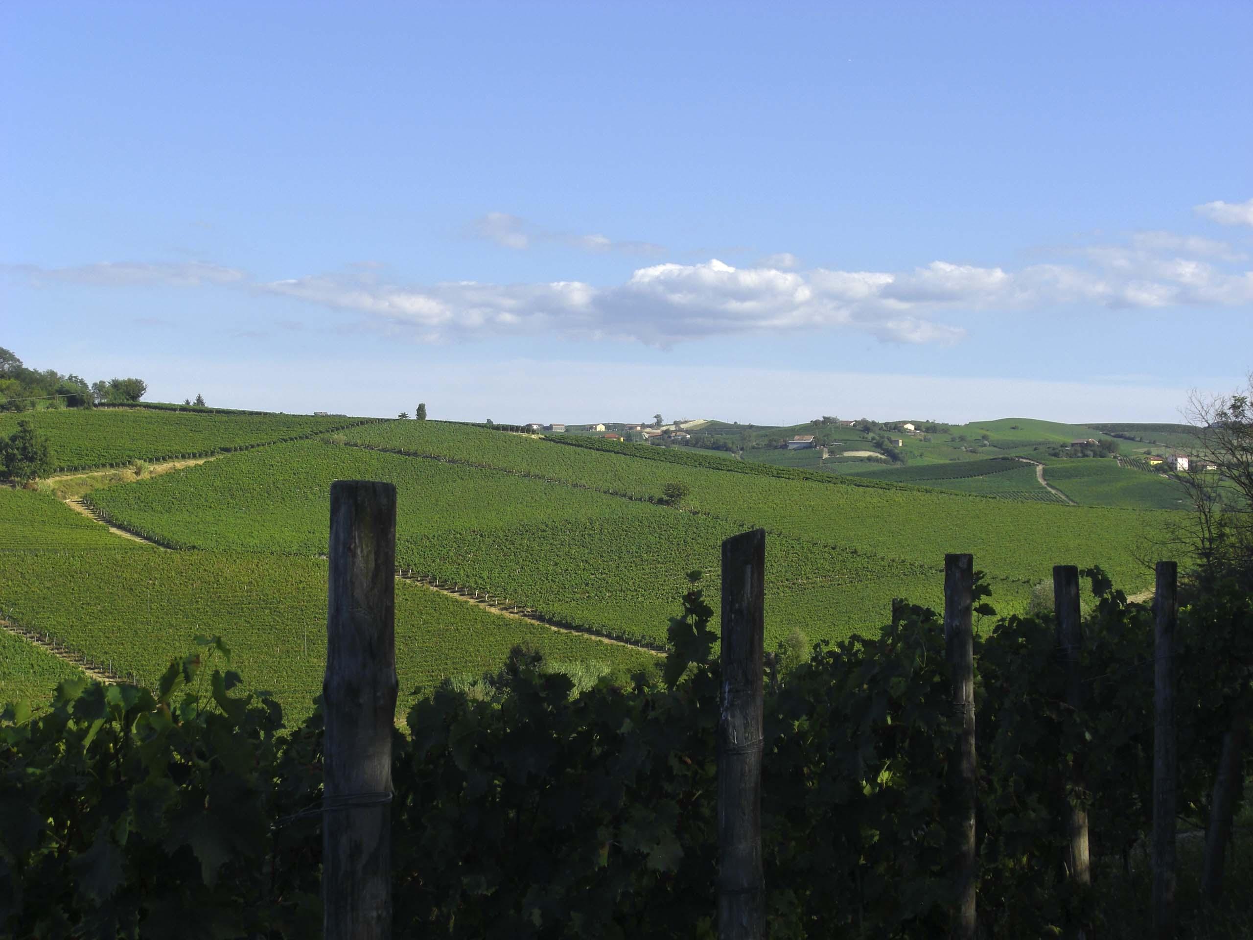 vigne-del-nizza
